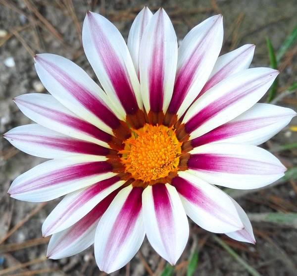 flowerlignano